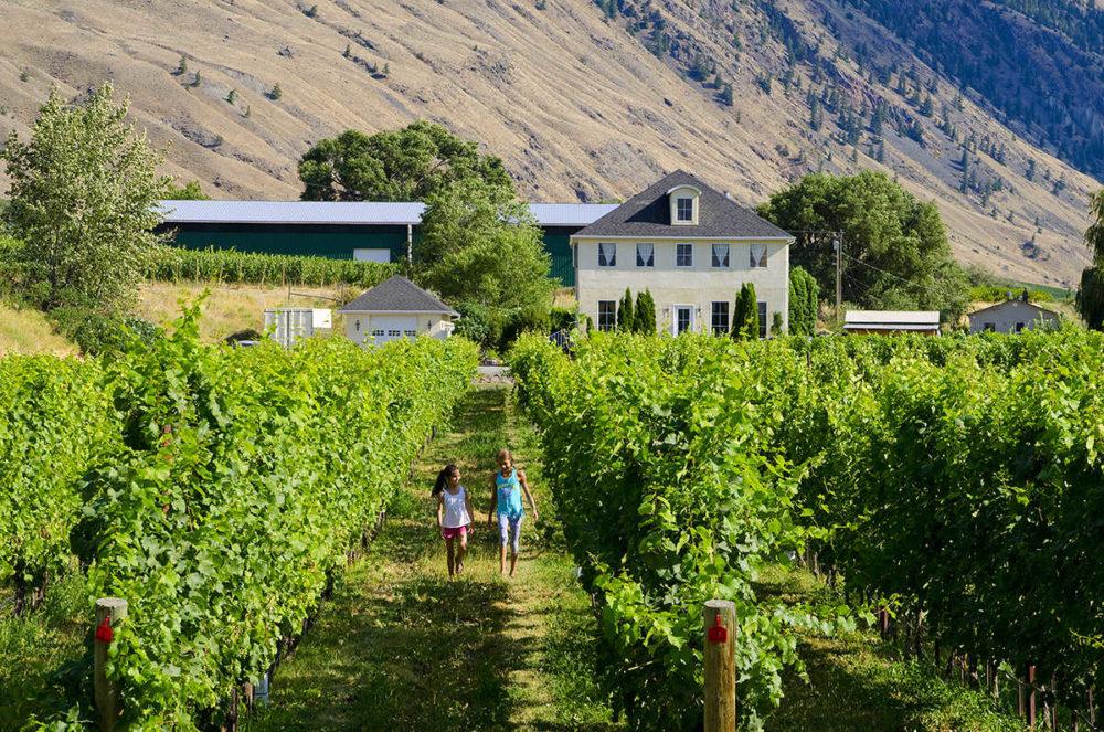 Vineyards to explore