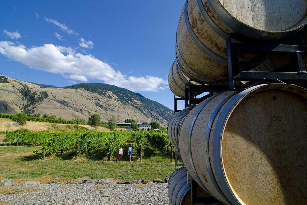 Well tended vineyards