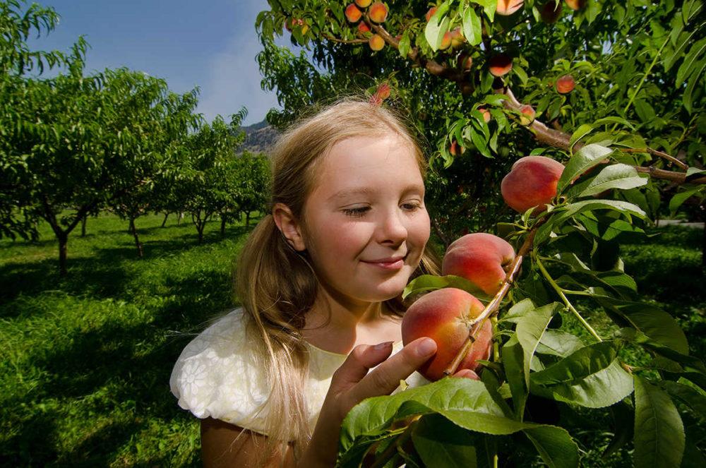 A land of fresh fruit