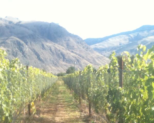 Little Farm Winery.png