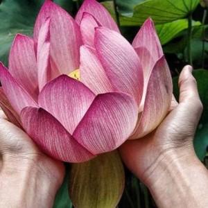 Lanna Thai Massage.jpg