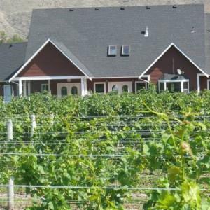 Cerelia Vineyards & Estate Winery.jpg