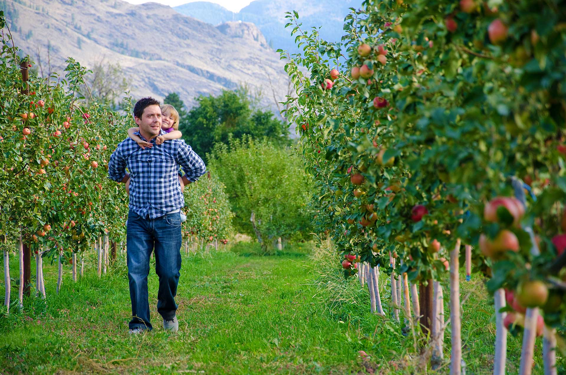 Fall is Harvest Time in the Similkameen Valley