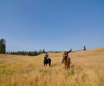 Backcountry Horseback Riding