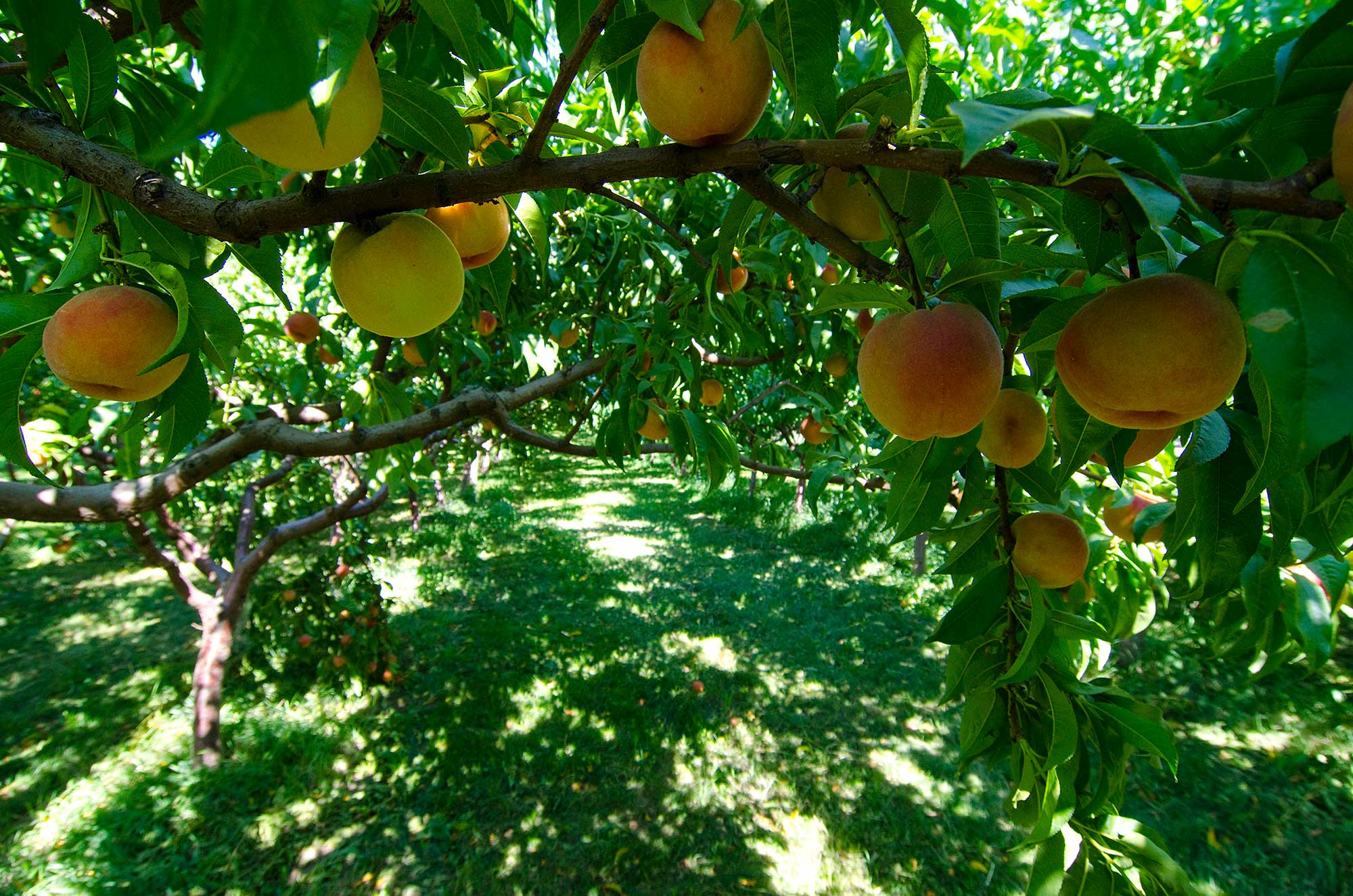Plan A Road Trip >> Fruit Stands and Orchards | Fruit Stand Capital | Similkameen