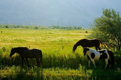 Road Trips to the Similkameen - horses