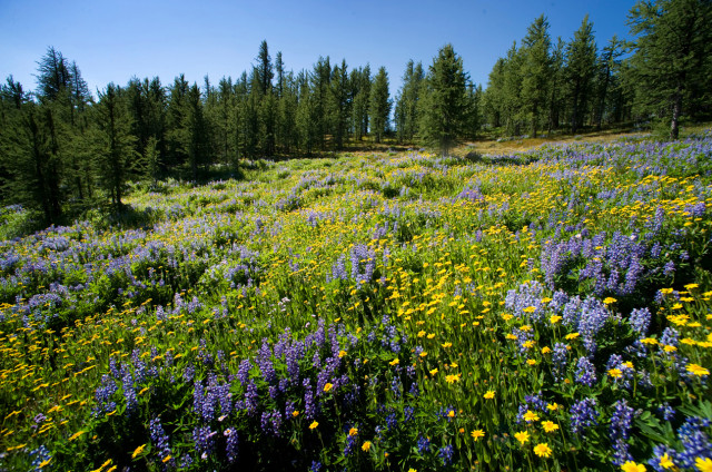 Spring flowers in the Similkameen Valley