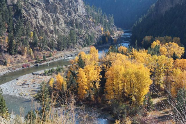 Golden fall leaves in the Similkameen Valley, Coalmont and Tulameen