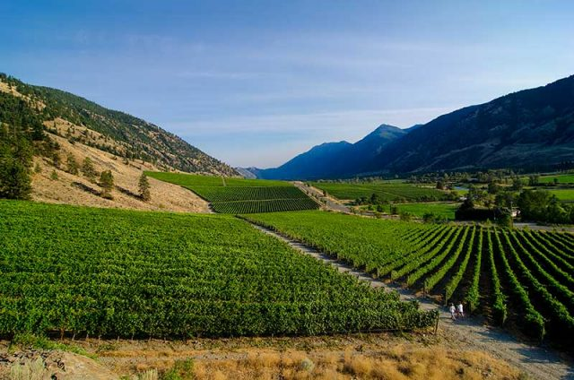 Similkameen Vineyard