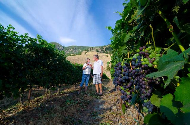 Strolling in the vineyard, orchard and vineyard stays
